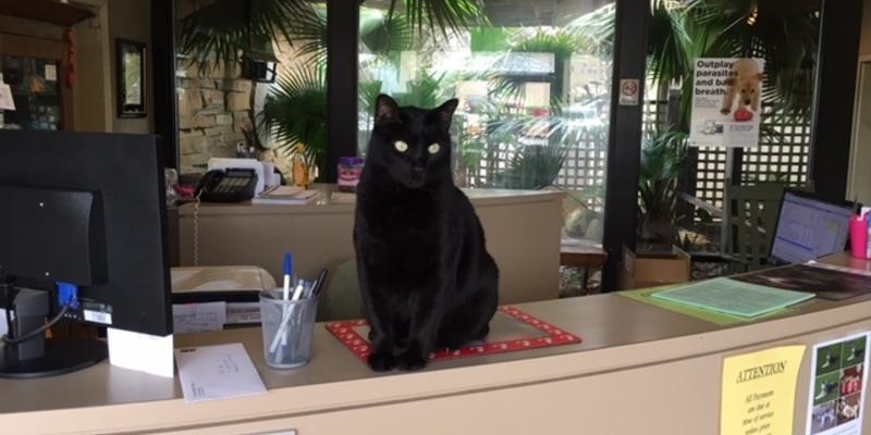 Pet Doctor in Troy, AL | <h1 style=